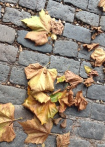 autumn leaves of London Plane tree