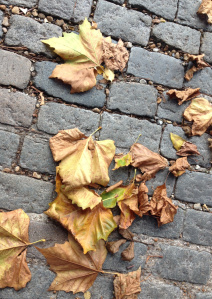 autumn leaves of London Plane tree
